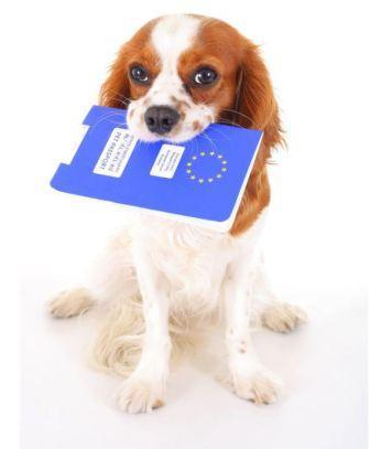 Conseils vétérinaires -Passeport