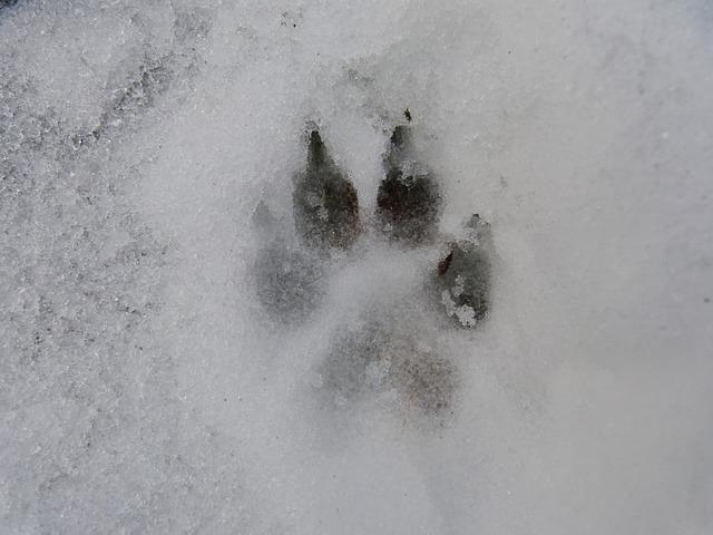Coussinets dans la neige