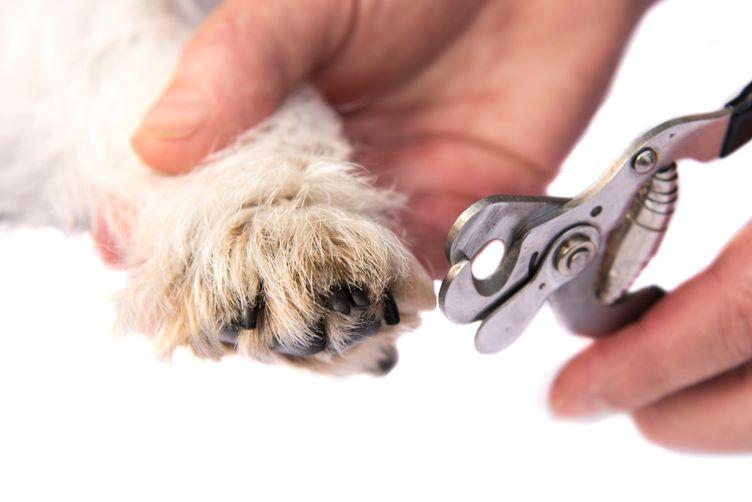Conseils santé chiens -griffes et coussinets