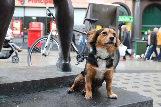 Veterinaire-paris-16-eme-chien-en-ville.jpg
