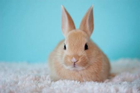 conseils lapins